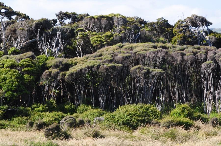 Curiosos bosques de la zona