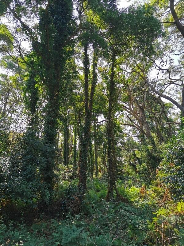 Vegetación de las Islas Cíes